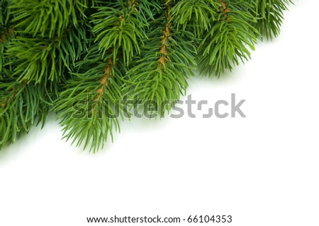 pine branch in the corner in white background - stock photo