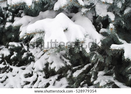 Pine branches heavily covered with fresh snow in winter forest/park