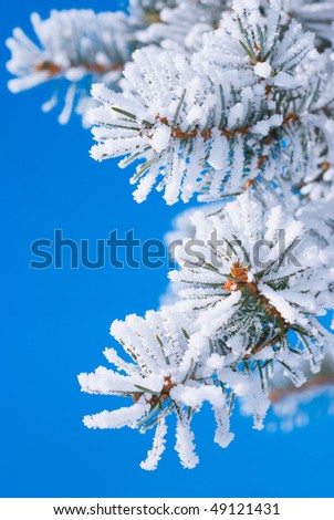 Pine branches in the snow against the blue sky - stock photo