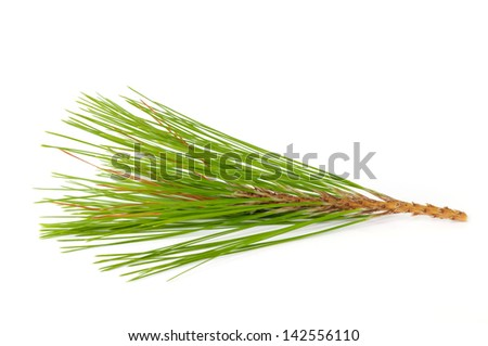 Pine branches isolated on white background. - stock photo