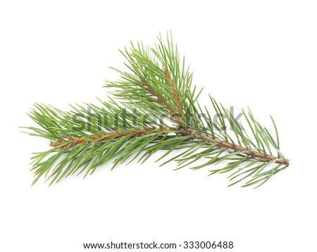 pine branches on a white background - stock photo