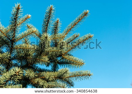 Pine branches on the sky background - stock photo