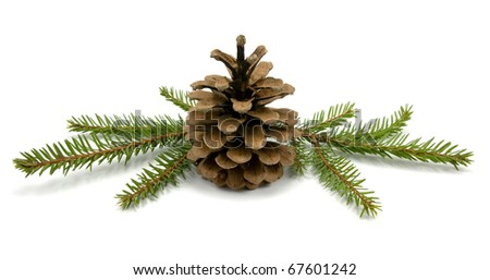 Pine Cone and fir branches. isolated on white - stock photo