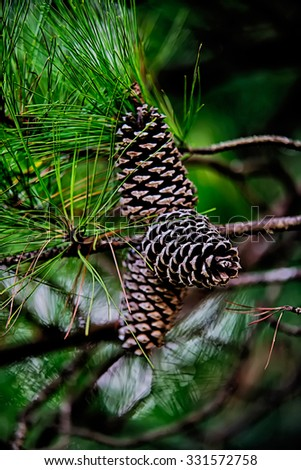 pine cone andgreen  tree branches - stock photo