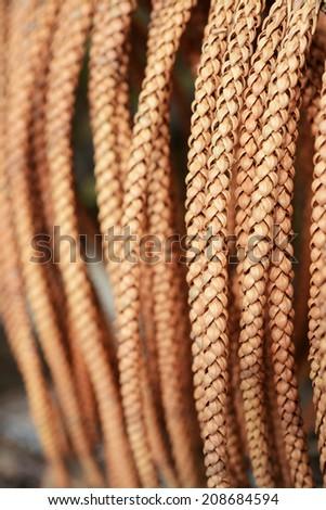 Pine Cone background - stock photo