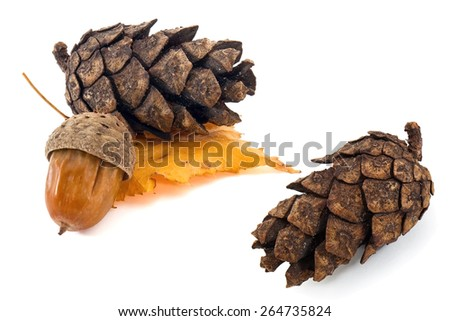 Pine cone composition with acorn and autumn birch leaf - stock photo