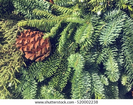 Pine cone in Christmas wreath with real  green fir needle,good for Christmas background wishing card and decorative