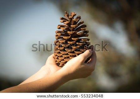 Pine cone in his hands