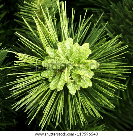 pine cone on a branch close - stock photo