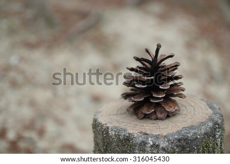 Pine cone on abstract defocused background. Suitable for Christmas card or poster designing. - stock photo