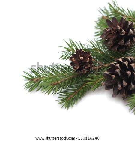 Pine cones and needles - stock photo