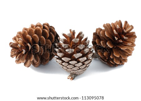 Pine cones group isolated on white - stock photo