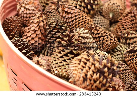 pine cones in a basket at the garden - stock photo