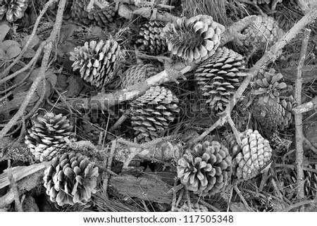Pine Cones in Black and White