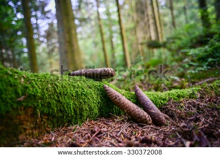 Pine cones in the Black Forest - stock photo
