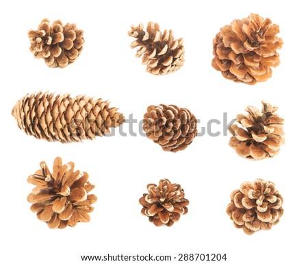 Pine cones isolated on white - stock photo