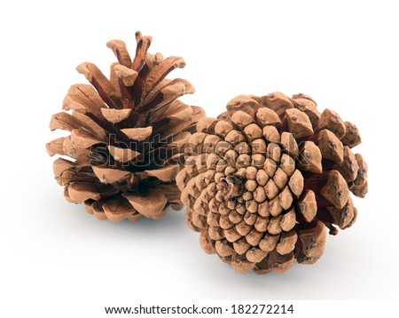 pine cones isolated on white background - stock photo