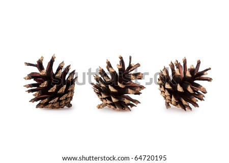 pine cones isolated on white background