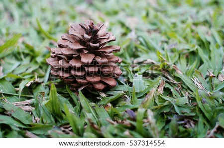 pine cones on the Green grass texture and background