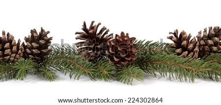 Pine cones on the white background - stock photo