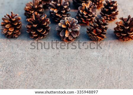 Pine cones with copy space
