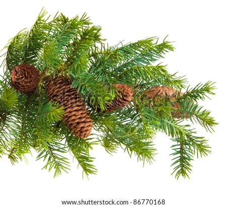 pine cones with pine branches. Cone and christmas tree isolated on white. - stock photo