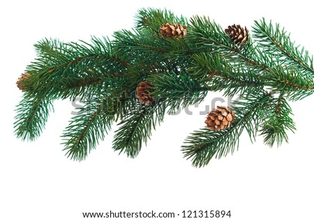 Pine cones with pine branches. Cone and christmas tree isolated on white background - stock photo