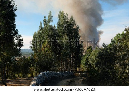 Pine field in flames of fire. Forest  smoke fire, Portugal