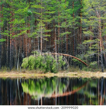 Pine forest and a lake - stock photo