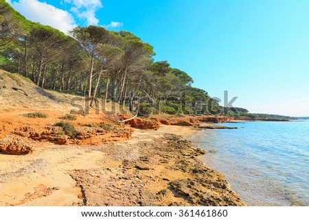 pine forest and rocky shore in Mugoni beach, Sardinia - stock photo