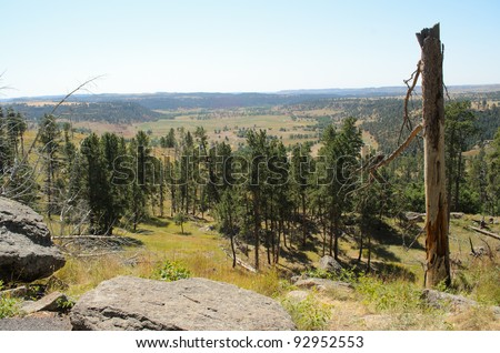 pine forest at Devils Tower