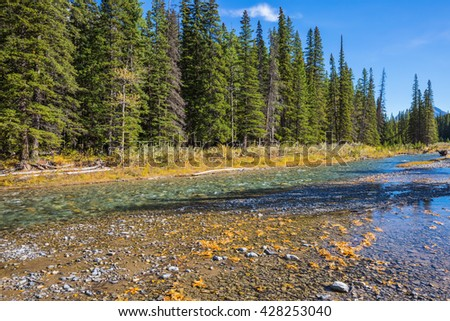 Pine forest in  Rocky Mountains. Beneaped creek autumn in Banff National Park. Canada - stock photo