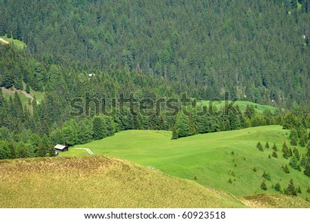 pine forest in the mountains with green fields in spring - stock photo