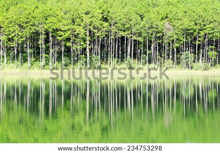 Pine forest in Tuyen Lam lake, Da lat, Vietnam.Da lat is one of the best tourism city in Vietnam. Dalat city is Vietnam's largest vegetable and flowers growing areas. - stock photo