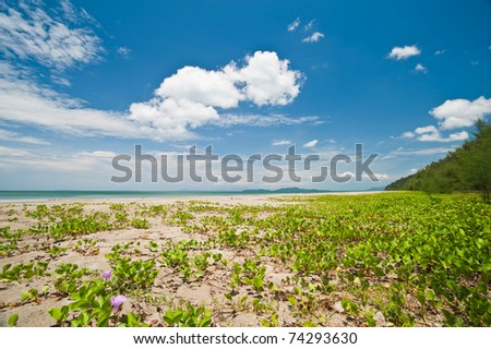 pine forest near beautiful beach with blue sky