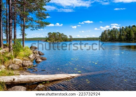 pine forest near the lake in the Salamajarvi National Park, Finland - stock photo