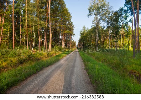 Pine Forest Road - stock photo