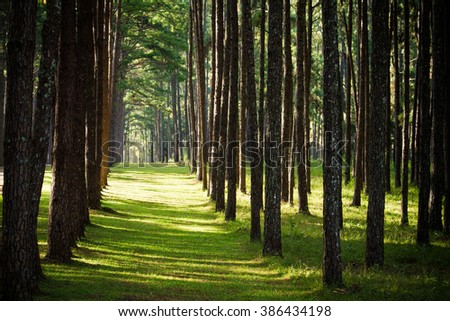 Pine forest with green grass