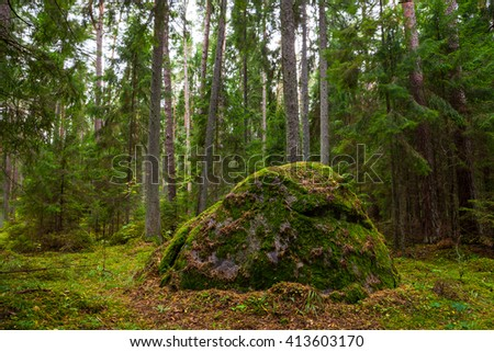 Pine forest with moss covered rocks. Lahemaa national park, Estonia