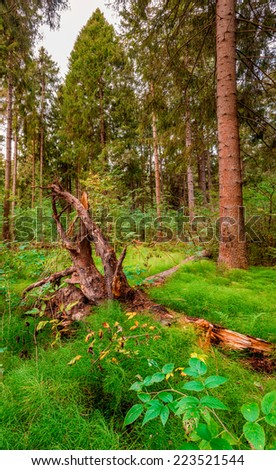 pine forest with tall green grass and driftwood in the foreground - stock photo