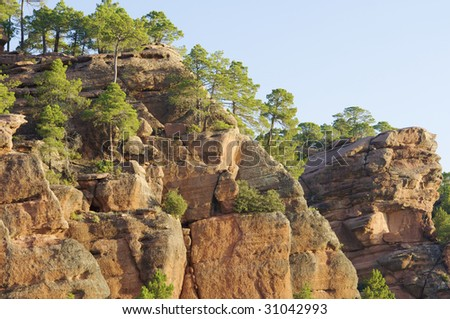 Pine grove with rocks in Rodeno