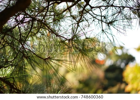 https://thumb1.shutterstock.com/display_pic_with_logo/167494286/748600360/stock-photo-pine-in-a-japanese-garden-in-autumn-748600360.jpg