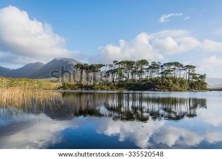 Pine Island, Connemara National Park, Ireland - stock photo