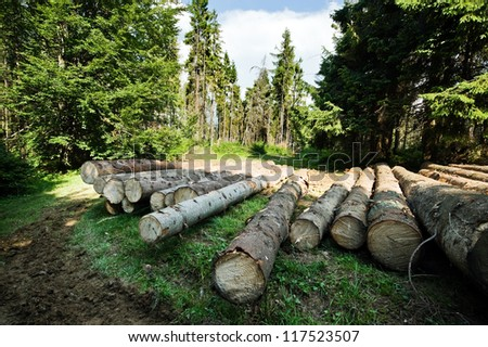 pine log in coniferous forest