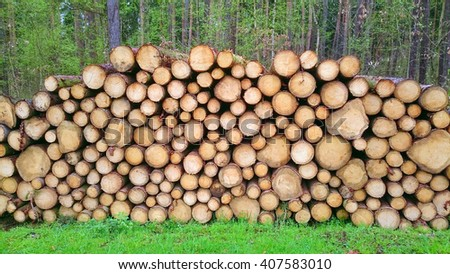 Pine logs in the forest. Firewood as a renewable energy source. - stock photo