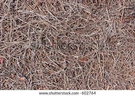 Pine mulch - stock photo