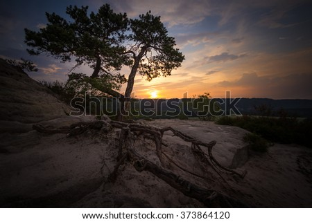 pine on a mountaintop in the saxon switzerland while sunset - stock photo