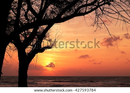 Pine on background of sunset sea songkhla