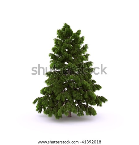 Pine on the white background