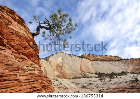Pine (Pinyon) Tree on top of a Sandstone Formation in Zion National Park - stock photo
